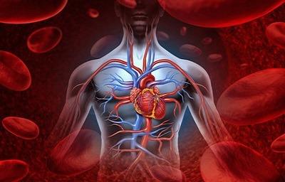 راههای افزایش جریان خون, جریان خون,کاهش فشار خون, بهبود گردش خون