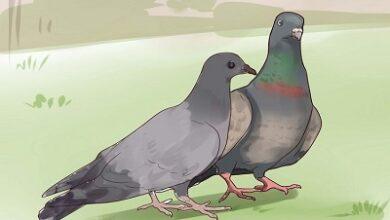 تصویر تست هوش: پرواز کبوتر