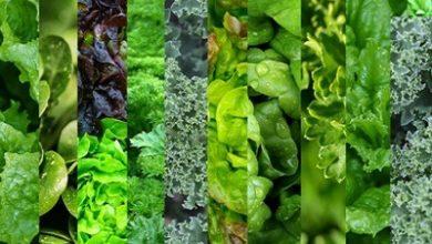 Photo of سبزهای مفید و پر خاصیت برای بدن !