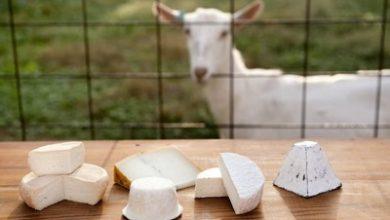 تصویر خواص پنیر بز