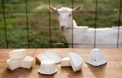 مزایای پنیر بز, مقایسه پنیر گاوی با پنیر بز,خواص پنیر بز,فواید پنیر بز
