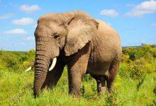 تصویر داستان ضرب المثل باز فیلش یاد هندوستان کرد