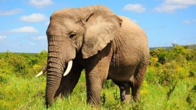 Photo of داستان ضرب المثل باز فیلش یاد هندوستان کرد