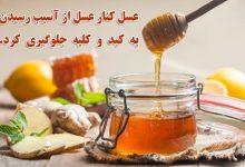 Photo of آشنایی با خواص عسل کنار یا عسل سدر